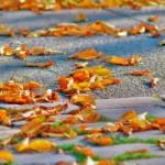 Herbstzeit - Die Blätter färben sich