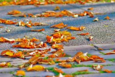 Blaetter-im-herbst in Mit Kindern den Herbst erleben